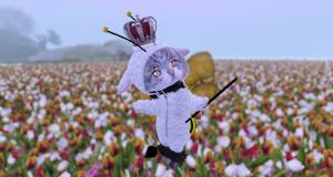 チューリップ畑
